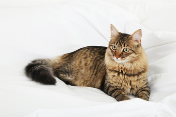 Beautiful cat resting on bed