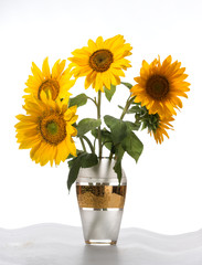Beautiful sunflower in a vase