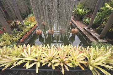 A pond in the Botanic garden near Pattaya city in Thailand