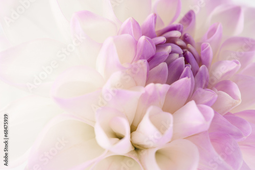 Foto op Canvas Bloemen White dahlia close-up