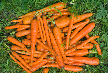 Pile of carrot 2