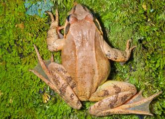 Frog on moss 10