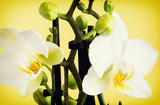 Macro photo of the yellow orchid
