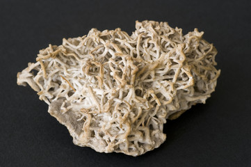 Coralloidal aragonite. 9cm across.