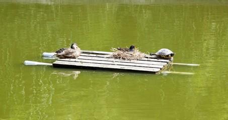 La bonne entente, la paix entre les espèces