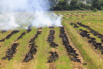 fire burning rice straw