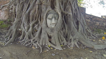 Head Buddha made of sandstone in the tree roots, Thailand. HD