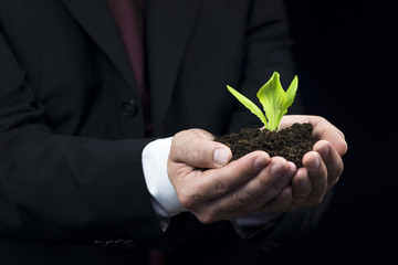 Green plant in business man hand