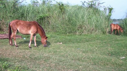 brown horse grassing on green field (2)