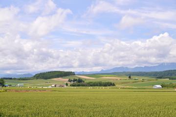 牧草地 風景