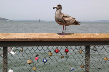 Locks with messages on fence with seagul overlooking harbor