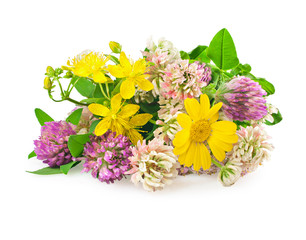 Beautiful flowers of wild medicinal herbs on white