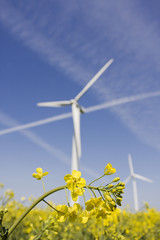 Wind turbine in yellow canola field