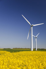 Wind turbines in yellow canola field.