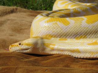 serpent 12