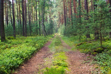 Leśna droga. © boguslavus