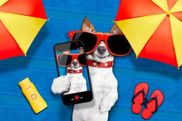 dog summer beach selfie