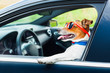 Leinwanddruck Bild - dog car  steering wheel