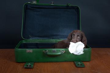 Welpe geht auf Reisen