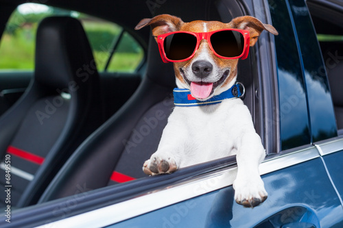 Fotobehang F1 dog window car