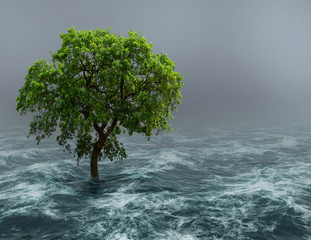 Tree in water.