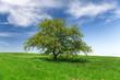 Obrazy na płótnie, fototapety, zdjęcia, fotoobrazy drukowane : Field,tree and blue sky