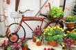 Vintage Bicycle Displayed in Flower Garden