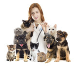 veterinarian and a group of pets - 68498910
