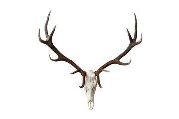Poroże jelenia w bardzo dobrym stanie.