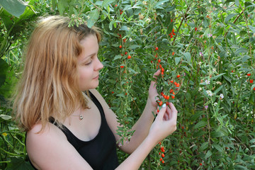 Agriculture, goji berry fruit plant and young girl in garden