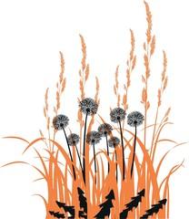 Black dandelions and orange grass