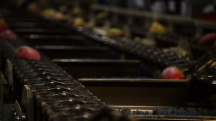 Mangoes fruit in a chain industrial