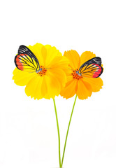 butterfly on yellow&Orange flower