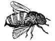 Obrazy na płótnie, fototapety, zdjęcia, fotoobrazy drukowane : working bee