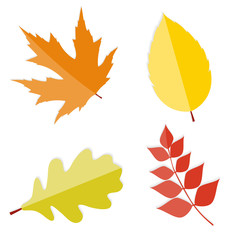 Shiny Autumn Natural Leaves  Vector Illustration