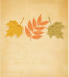 Retro autumn background with colorful leaves. Vector.