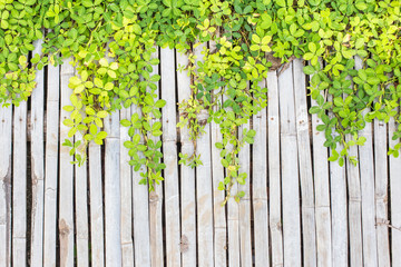 Plants on bamboo background
