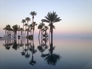reflejos de palmeras