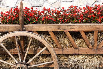 Ox Cart with  Flowers