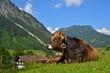 Kuh, Gebirge, Dorf