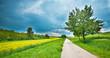 Road along the field