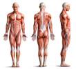 Leinwanddruck Bild - anathomy
