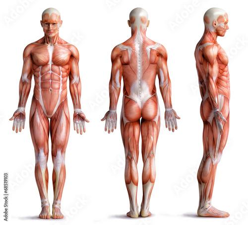 Leinwanddruck Bild anathomy