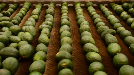 Industry avocados, packaging line