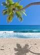 cocotier penché sur plage