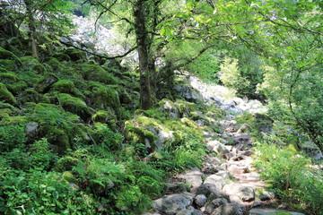 Vallée de la Wormsa dans les Vosges