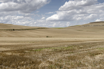 Castilla fields