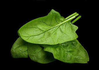 Spinach herb leaf closeup isolated on black