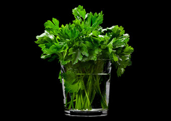 Parsley aromatic herb on black