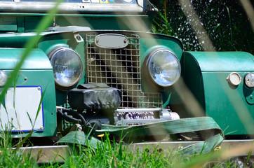 Peeking through the grass